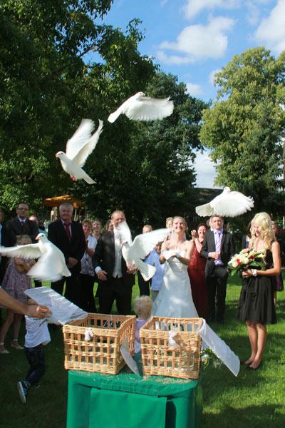 Lassen Sie die weißen Tauben zu Ihrer Hochzeit steigen